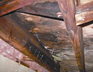 mold and rot in a Santa Rosa crawl space