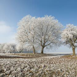 Frost covering trees and a grassy field in Rio Linda
